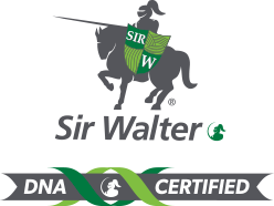 Sir Walter Buffalo DNA Certified Turf