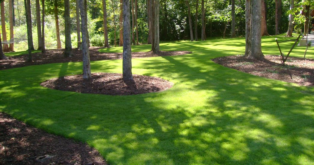 Why Sir Grange Zoysia is 'a Finer Choice'