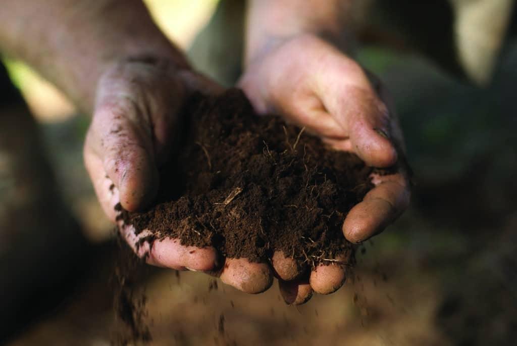 Soil Preparation for Healthy Lawn Establishment